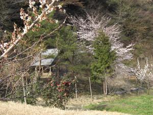 Syodoku_062