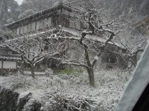 Wanui_020
